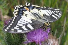 planten vlinders aantrekken